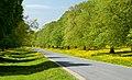 Beverley Westwood IMG 1344.JPG - panoramio.jpg