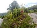 Biciklisticka Staza Sanica - panoramio.jpg