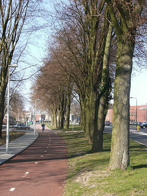 Cycling in the Netherlands - A typical bi-directional cycle path design (middle, in red), a roadway on the right with a green verge in between. There is a footpath (in grey) to the bike path's left.