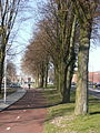 Bicycle lane Dronten.JPG