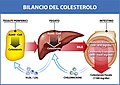 Bilancio del colesterolo.jpg