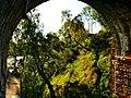 Birches - panoramio (3).jpg
