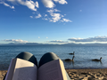Bird watching at Sand Harbor beach, Lake Tahoe, California.png