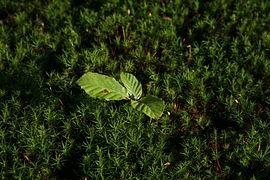 Birth of a beech tree.jpg