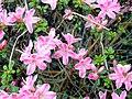 Blüten Boden.JPG
