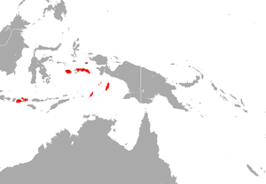 Black-bearded Flying Fox area.png