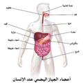 Blausen 0316 DigestiveSystem-ar.png