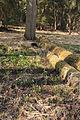 Bledule jarní v PR Králova zahrada 24.jpg