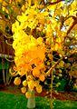 Bloomed yellow flowers.jpg