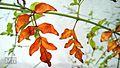 Blossom leaf.jpg