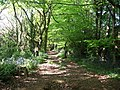 Bluebell Path - geograph.org.uk - 1310343.jpg
