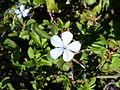 Blueflower2.jpg