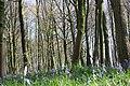 Bois d'Hubermont, Bois d'Antoing, Bois de Leuze 06.jpg