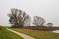 Bomengroep aan fietspad om Langweerderwielen (Langwarder Wielen). Oostkant 02.jpg