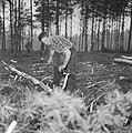 Bosbewerking, arbeiders, boomstammen, gereedschappen, Bestanddeelnr 251-9128.jpg