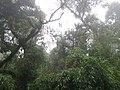 Bosque de niebla - panoramio.jpg