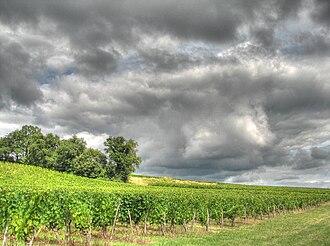 Côtes de Bourg - Vineyards in the Côtes de Bourg.