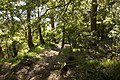 Bowral NSW 2576, Australia - panoramio (113).jpg