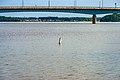 Bridge Macdonald-Cartier Gatineau, Ottawa (40196095954).jpg