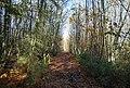 Bridleway through Hurst Wood - geograph.org.uk - 1570642.jpg