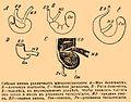 Brockhaus and Efron Encyclopedic Dictionary b59 469-0.jpg