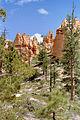 Bryce Canyon NP15.jpg