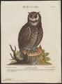 Bubo maximus - 1700-1880 - Print - Iconographia Zoologica - Special Collections University of Amsterdam - UBA01 IZ18400073.tif