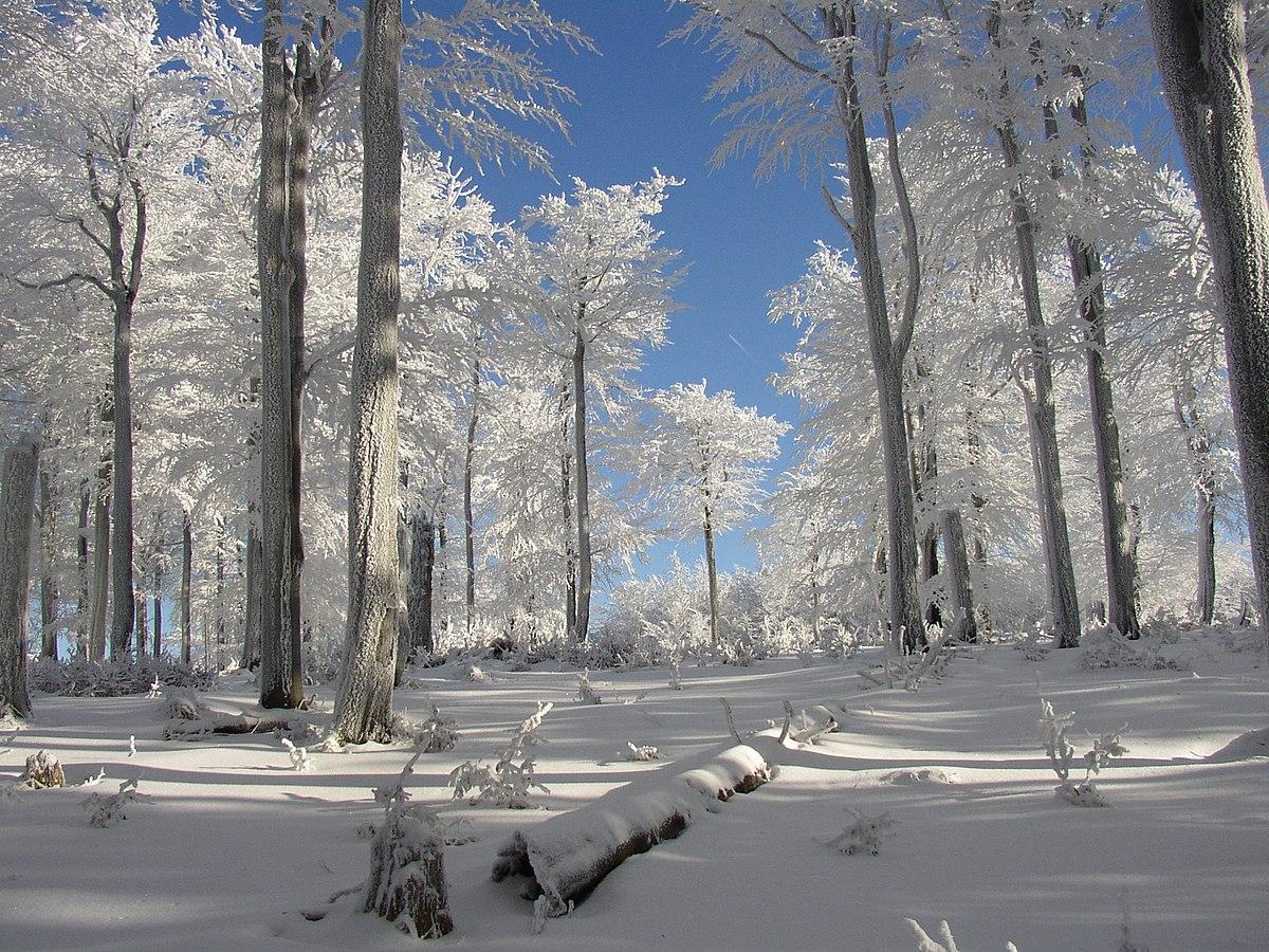 Bosque templado caducifolio wikipedia la enciclopedia libre for Arboles de hoja perenne para clima frio