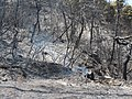 Burned forest Kalamos.jpg