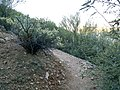Butcher Jones Trail - Mt. Pinter Loop Trail, Saguaro Lake - panoramio (24).jpg