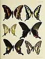 Butterflies from China, Japan, and Corea (19142252800).jpg