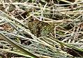 Butterfly-brown.jpg