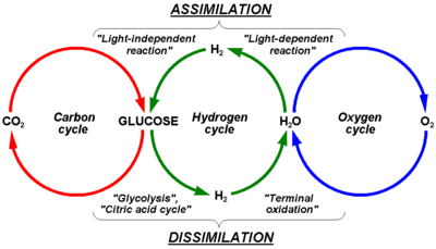 hydrogen cycle wikipedia