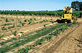 CSIRO ScienceImage 4474 Tile drainage installation machine on farm in Griffith NSW Machine is installing clay tile drainage pipes in area planted with young grapevines Mature vines in background.jpg