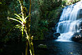Cachoeira - Cunha Indaiá 2.jpg