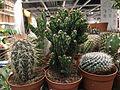 Cactus Dubai 01.jpg