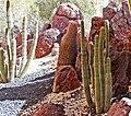 Cactus Garden, Living Desert 3-15d (16785400275).jpg
