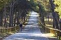 Camino pinada.jpg