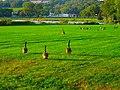 Canada Geese - panoramio (17).jpg