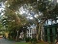 Canaries Tenerife Santa Cruz Plaza San Francisco Statue 02092015 - panoramio.jpg