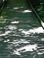 Canebrake Rattlesnake (8741808888).jpg