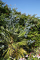 Capel-Manor-College-Gardens hedge shrub border.jpg
