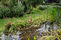Capel Manor College Gardens moat pond Enfield London England.jpg