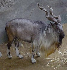 List of mammals of Pakistan - Wikipedia