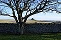 Car Park View - geograph.org.uk - 411149.jpg