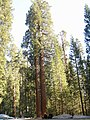 Car Park of Grants Grove - Kings Canyon - panoramio.jpg