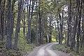 Carretera austral, patagonia chilena - panoramio.jpg