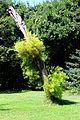 Caserta jardín inglés. 40.JPG