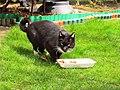 Cat39 (16560095933).jpg