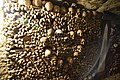 Catacombes de Paris (22266959428).jpg